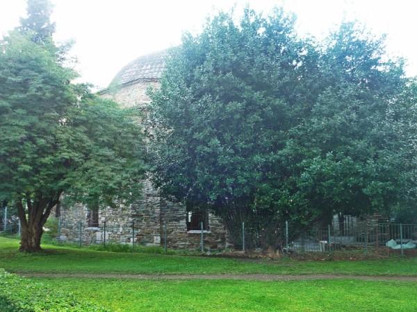 Pasha Garden
