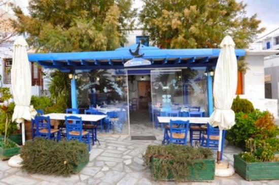 Best Taverns to enjoy Fresh Fish in Tinos`