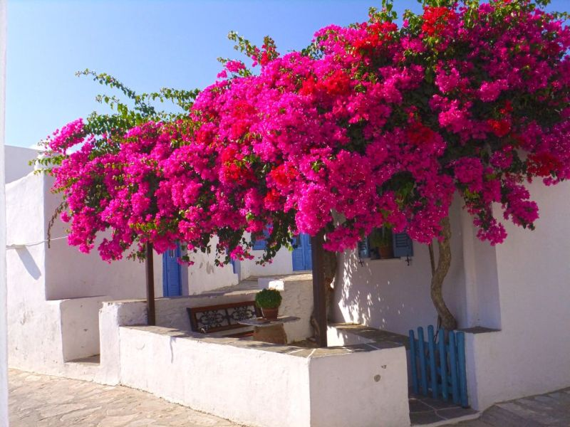Explore the traditional cycladic scenery